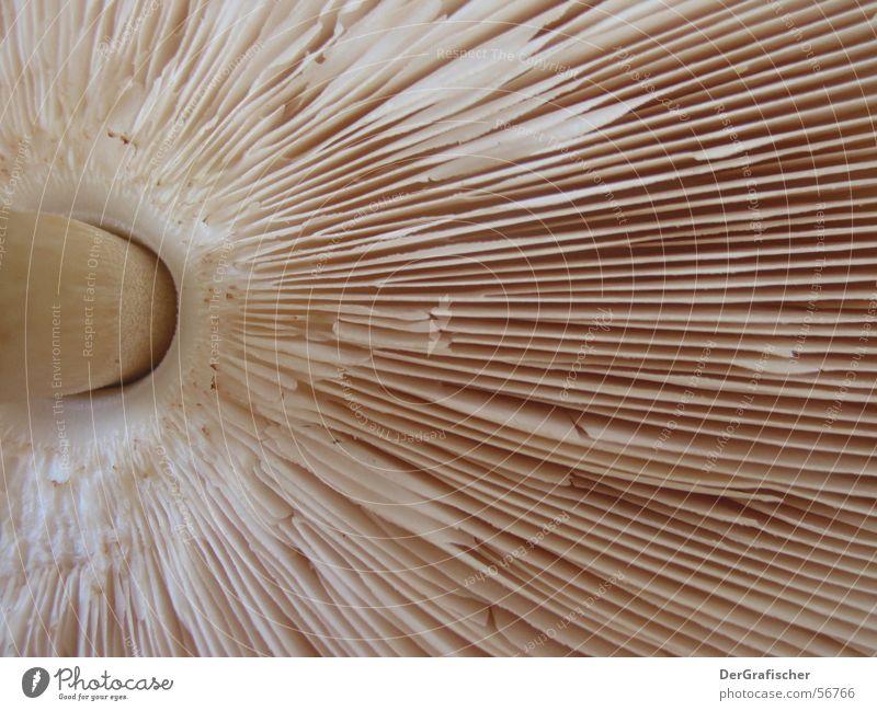 Lighting Umbrella Stalk Hollow Mushroom Beige Disk