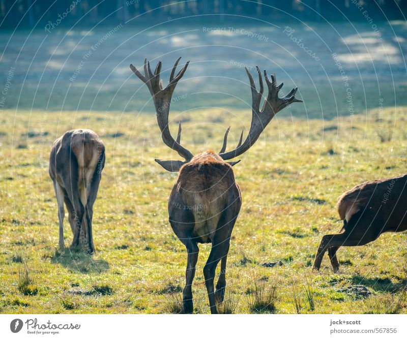 arse antlers Animal Winter Forest Environment Warmth Life Movement Meadow Natural Jump Together Wild animal Authentic Stand Beautiful weather Serene