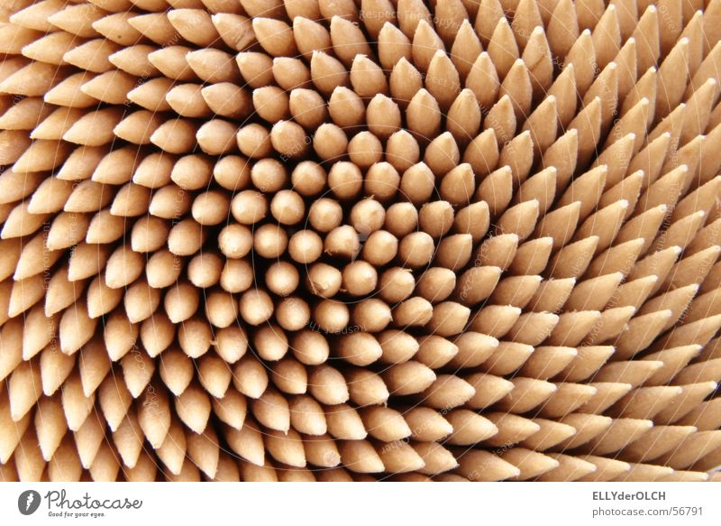 set of teeth Toothpick Pierce Wood Round Shelling Dentist Meal Tool Curls Scratch Thorny Interdental space Gastronomy Macro (Extreme close-up) Close-up Point