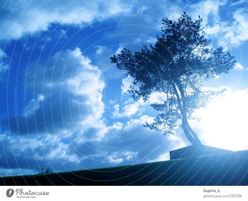 shining Tree Summer Black Clouds Sun Sky Blue Landscape