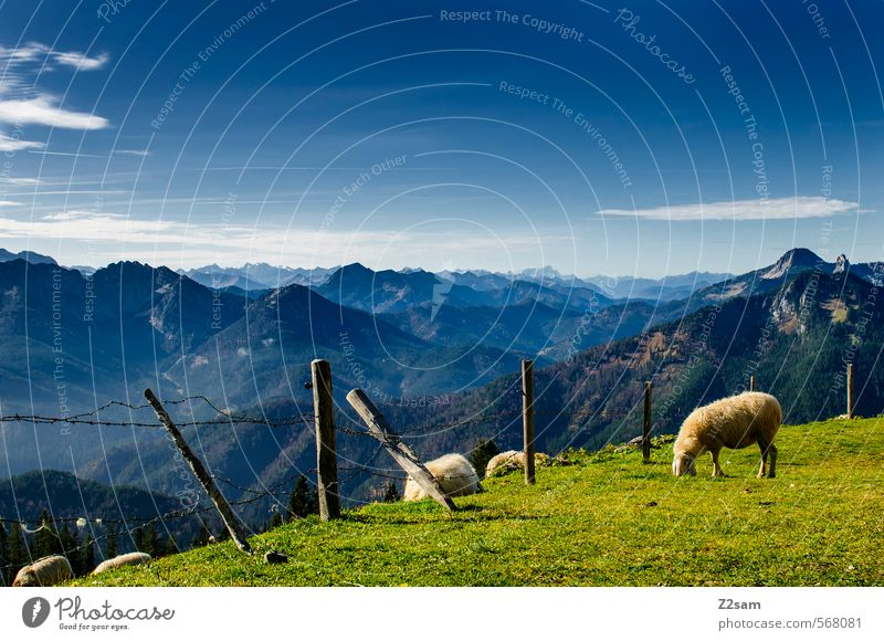 rather so cozy! Trip Mountain Hiking Nature Landscape Sky Autumn Beautiful weather Meadow Alps Peak Sheep To feed Stand Sustainability Natural Blue Green