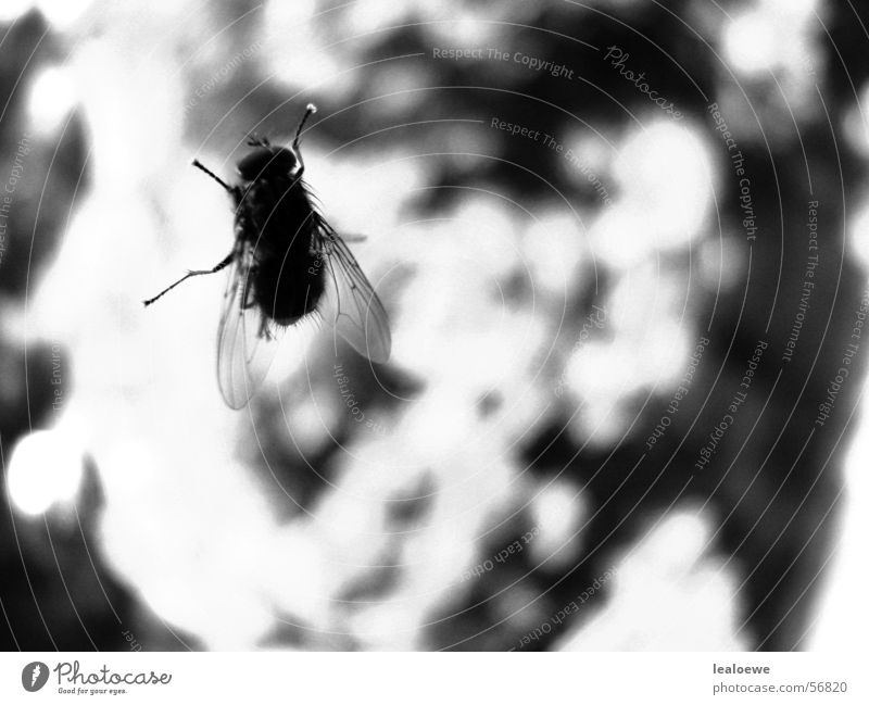 Window Fly Near Insect Window pane