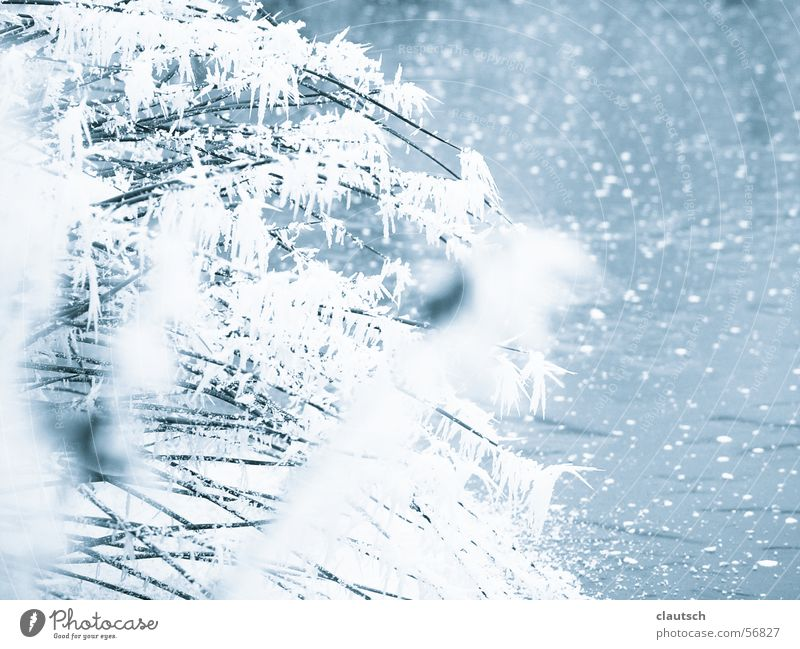 Nature Water Blue Winter Calm Cold Grass Lake Ice Frost Idyll Frozen Freeze Blade of grass Pond Fine