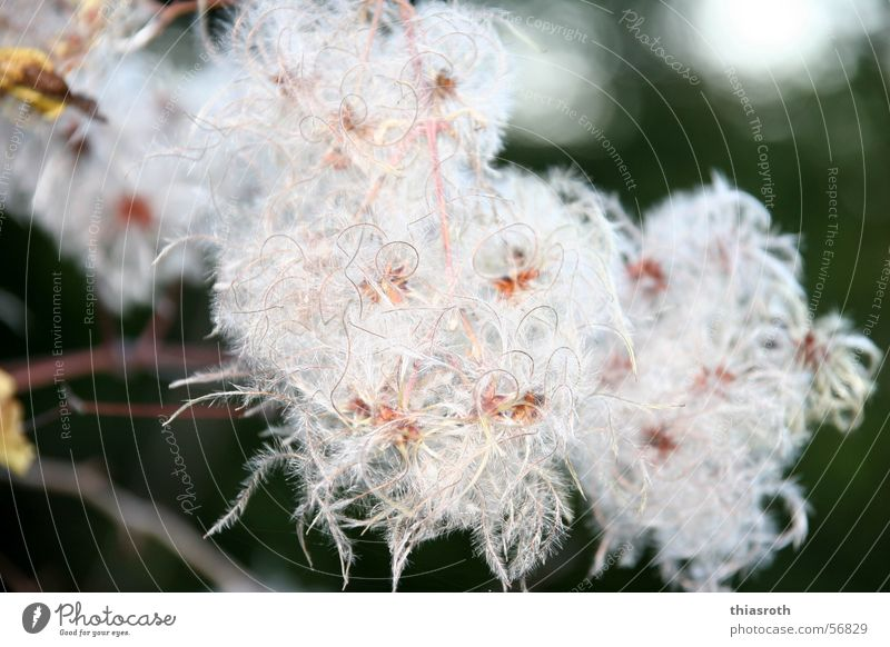 The beauty of the ugly Autumn Multicoloured Plant Blossom Beautiful Transience Think Cotton grass Tree Blossoming Macro (Extreme close-up) Exterior shot