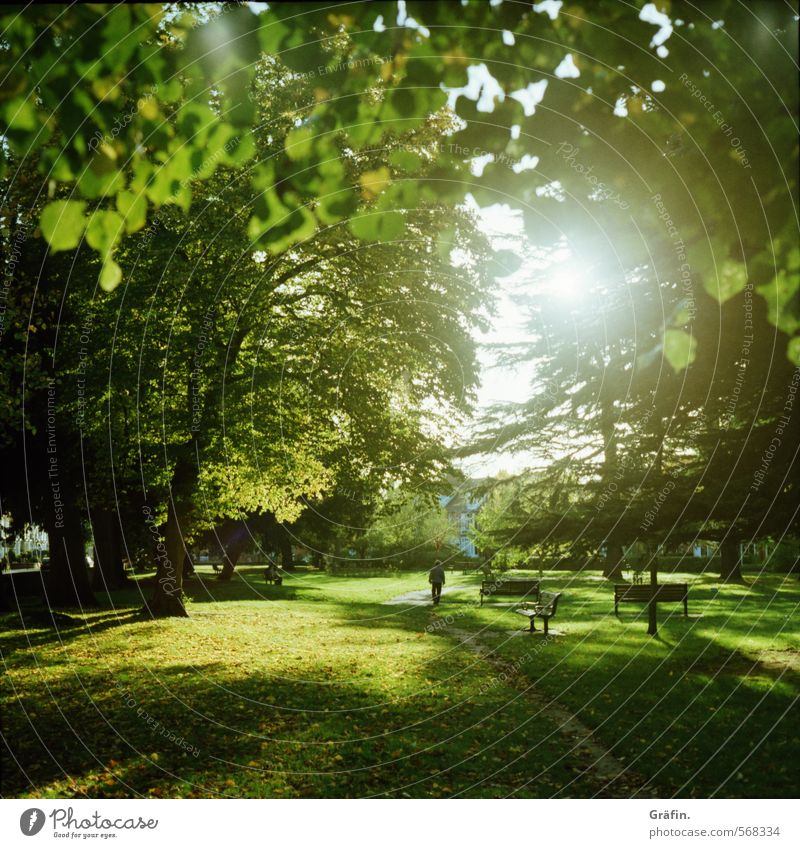 always after the sun Relaxation Trip Sunlight Autumn Tree Park Meadow Green Calm Contentment Leisure and hobbies Idyll Environment To go for a walk Colour photo