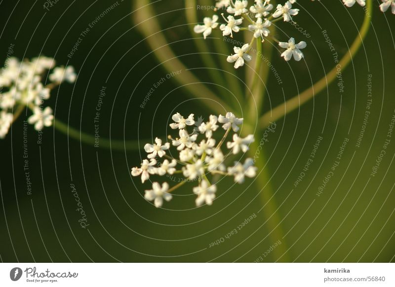 Flower Green Plant Summer Joy Spring Healthy Dynamics Harmonious Swing