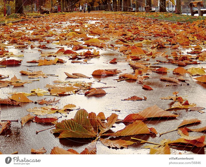 leaf path Autumn Leaf Tree Multiple Infinity leaves Lanes & trails Street Chestnut tree Autumnal Many Lie