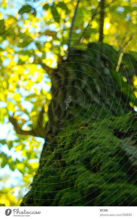 Nature Tree Plant Leaf Moss Tree bark