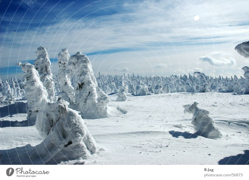 Schlumpfhausen Winter forest Snowscape Forest Clouds Cold Blown away Ice Landscape Tree Blue Sky Fragment Nature