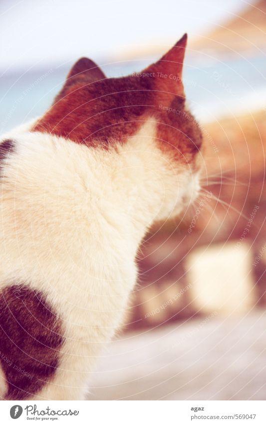 Cat Animal Freedom Pelt Ear Pet