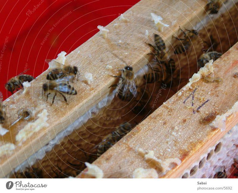 bine Bee Honey-comb Beehive Bee-keeper Transport beeswax