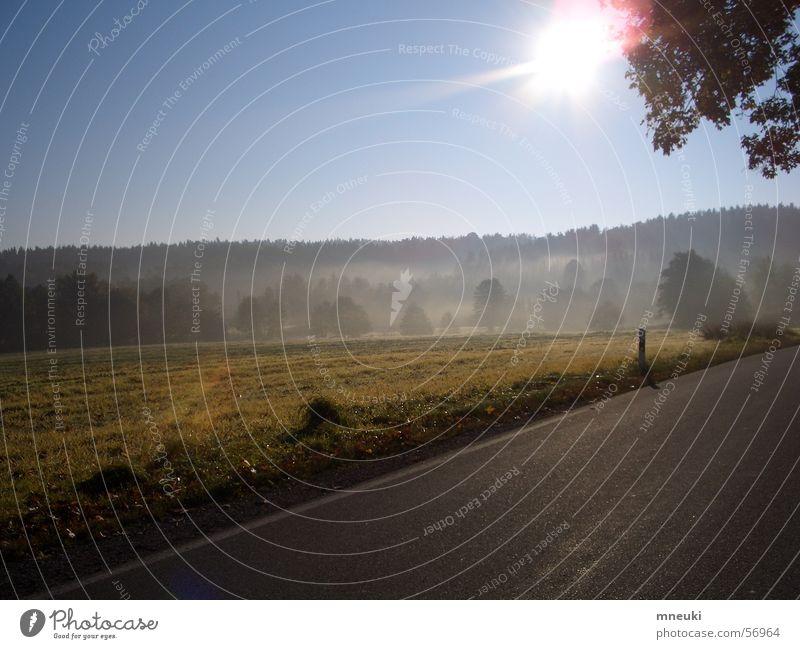 Sun Forest Landscape Field Fog