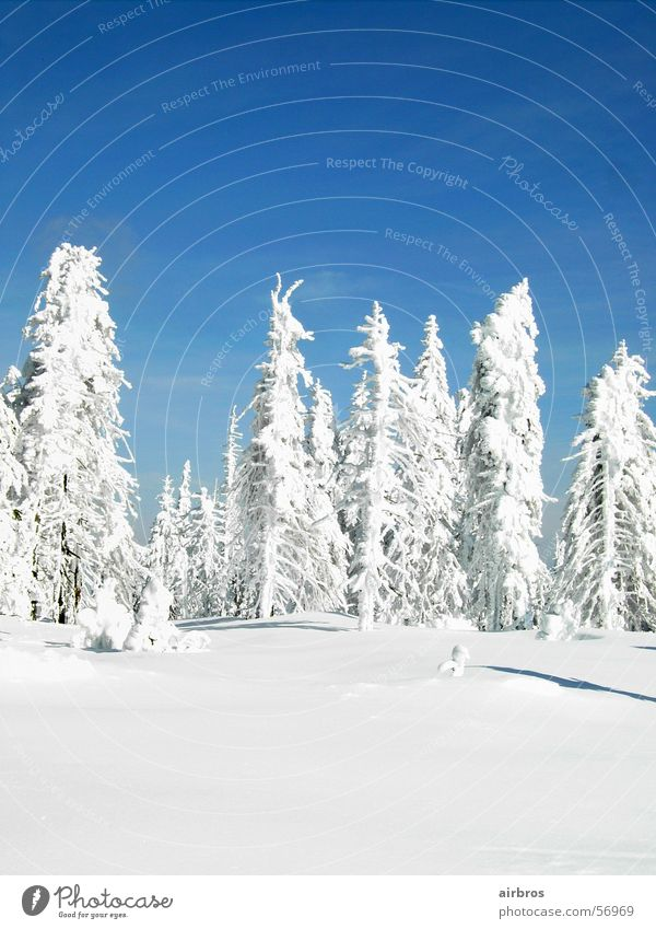 Sky Blue White Sun Snow Gorgeous