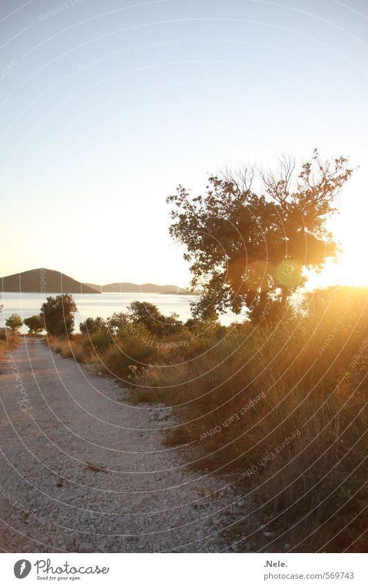 croatia. Nature Landscape Earth Water Sky Sun Sunrise Sunset Sunlight Summer Beautiful weather Wild plant Hill Coast Ocean Mediterranean sea Island