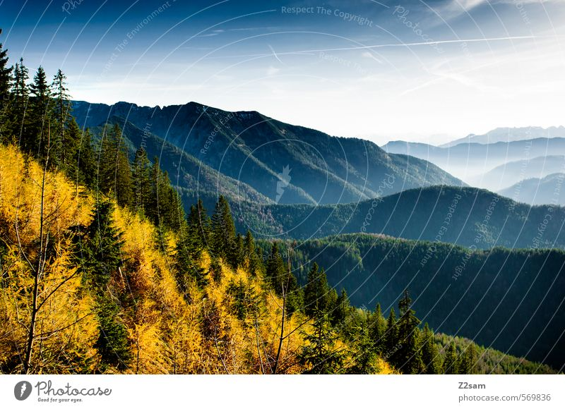 autumn panorama Mountain Hiking Environment Nature Landscape Autumn Beautiful weather Tree Bushes Forest Hill Alps Sustainability Natural Above Blue Yellow