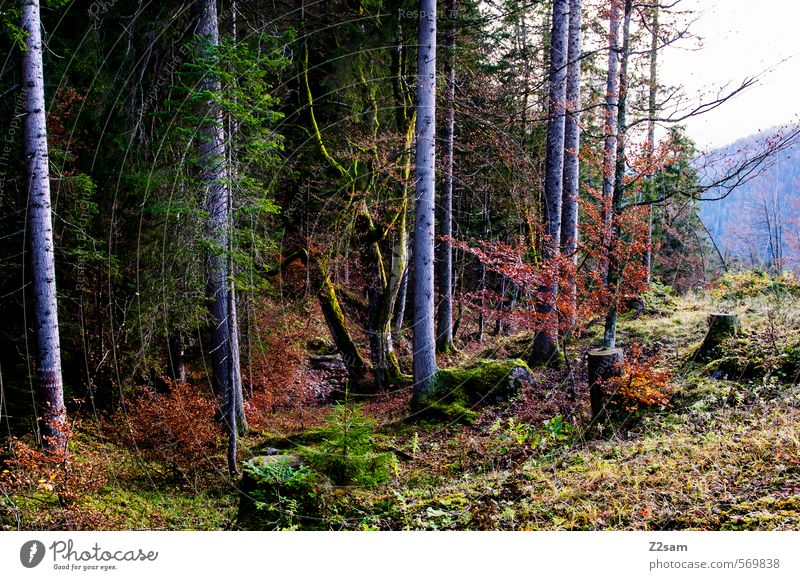 autumn impression Hiking Autumn Fog Tree Bushes Forest Cold Sustainability Natural Multicoloured Green Red Calm Colour Idyll Nature Environment Rotwand