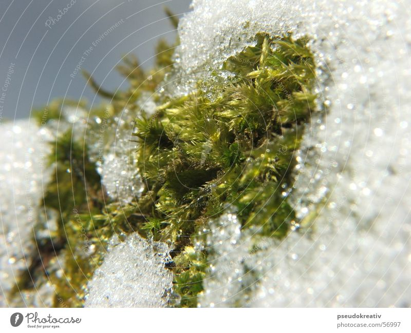Sven - end of winter Cold Spring Winter Thaw White Green Macro (Extreme close-up) Snow Cover Rope Detail