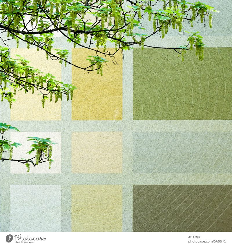 spring fever Style Design Wall (building) Spring Branch Wall (barrier) Facade Blossoming Simple Hip & trendy Beautiful Green Spring fever Colour Arrangement
