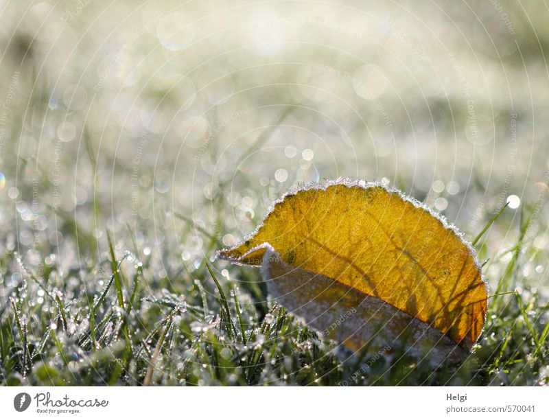 Nature Beautiful Green White Plant Calm Leaf Winter Yellow Cold Environment Meadow Grass Small Natural Exceptional