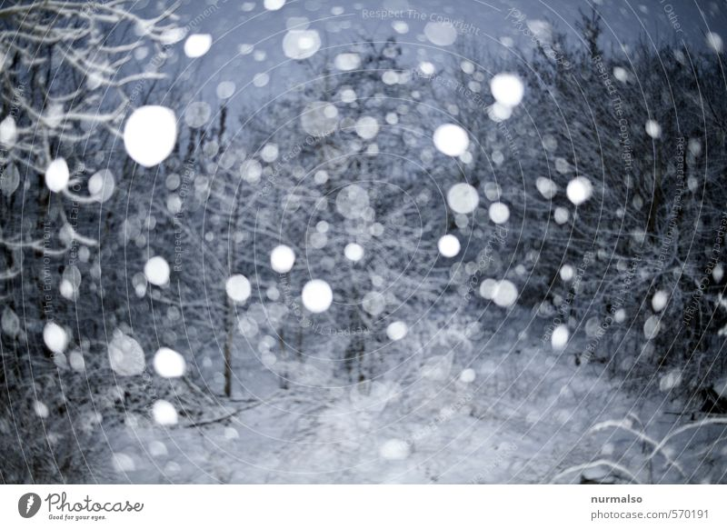 Nature Calm Winter Cold Snow Garden Dream Moody Snowfall Ice Glittering Gloomy Elements Frost To fall Mysterious