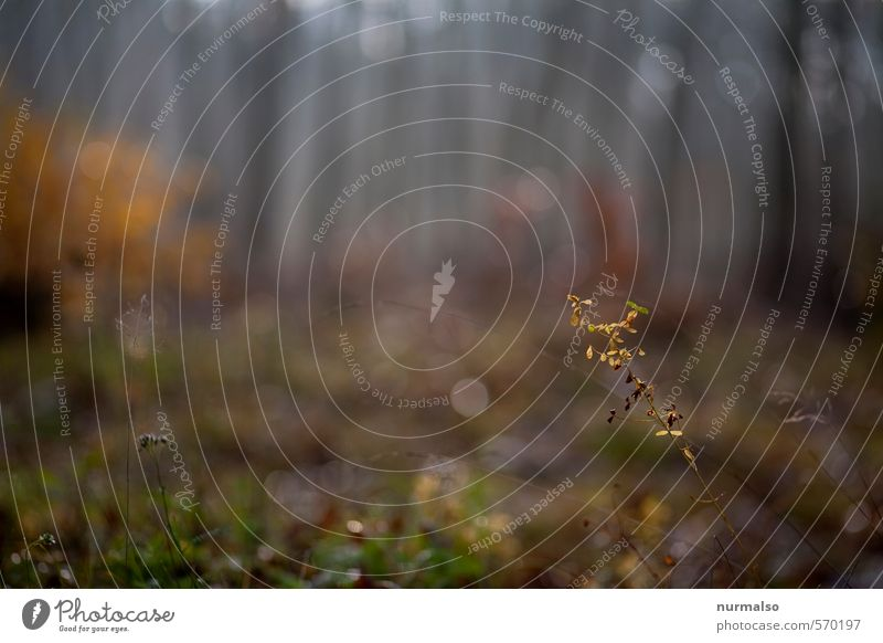 delicately smoky bright grey autumn Leisure and hobbies Jogging Yoga Art Nature Landscape Plant Animal Drops of water Autumn Climate Weather Fog Tree Forest