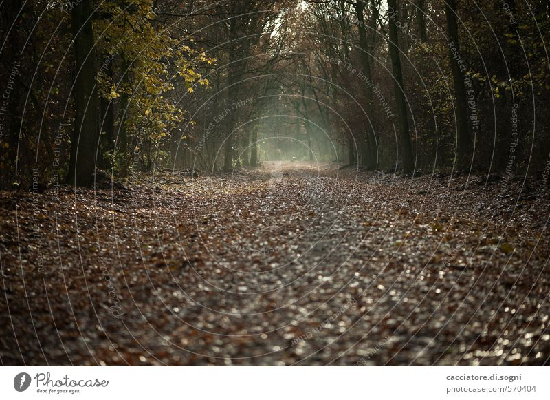 Straight ahead and through Nature Autumn Forest Lanes & trails Threat Dark Creepy Brown Black Calm Modest Humble Sadness Longing Wanderlust Disappointment