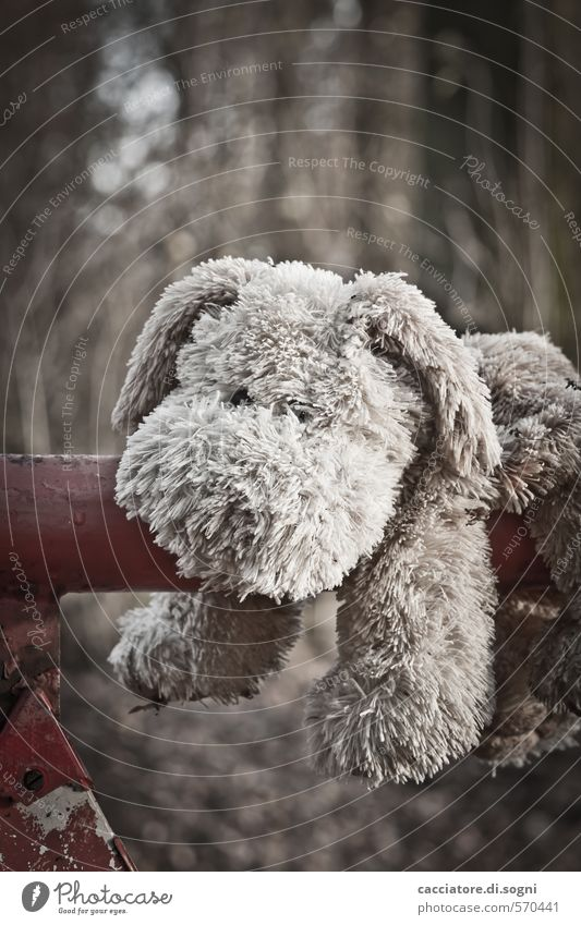Give me a hug Dog 1 Animal Cuddly toy Toy dog Old Dirty Dark Brown Gray Sympathy Friendship Loyalty Modest Sadness Lovesickness Fatigue Longing Homesickness
