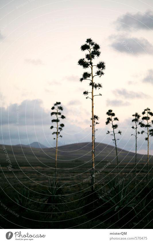 Plant Landscape Blossom Art Esthetic Spain Wanderlust Cactus Steppe Land Feature Fuerteventura Dinosaur Primitive times