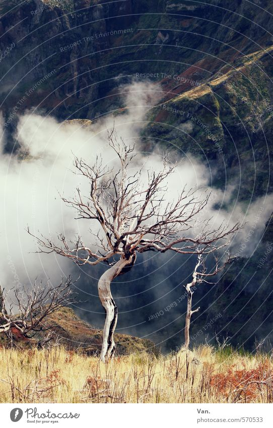 Nature Old Plant Tree Clouds Yellow Mountain Autumn Death Grass Rock Bleak