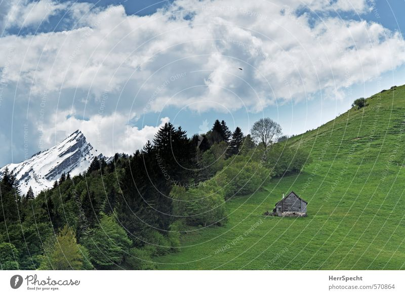 Heidiland Environment Nature Landscape Sky Clouds Snow Forest Hill Rock Alps Mountain Snowcapped peak Switzerland House (Residential Structure) Hut Fresh