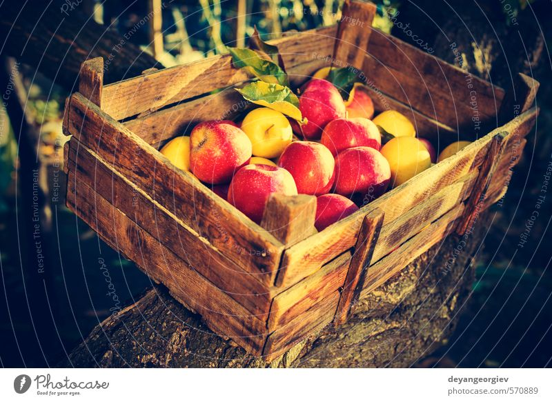 Apples in an old wooden crate on tree Fruit Sun Garden Child Nature Plant Autumn Tree Grass Leaf Old Growth Fresh Small Retro Yellow Green Red Tradition box