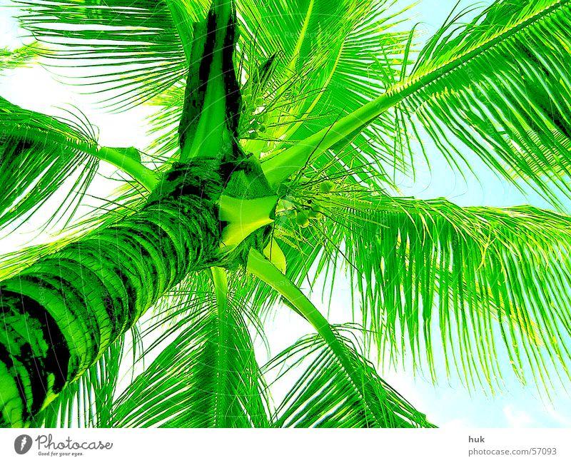 Sky Nature Vacation & Travel Green Summer Plant Sun Warmth Bright Physics Palm tree Cuba Dominican Republic