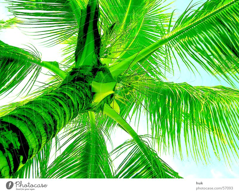 under a palm tree Palm tree Dominican Republic Summer Vacation & Travel Physics Green Plant Cuba Sun Warmth Bright Sky Nature