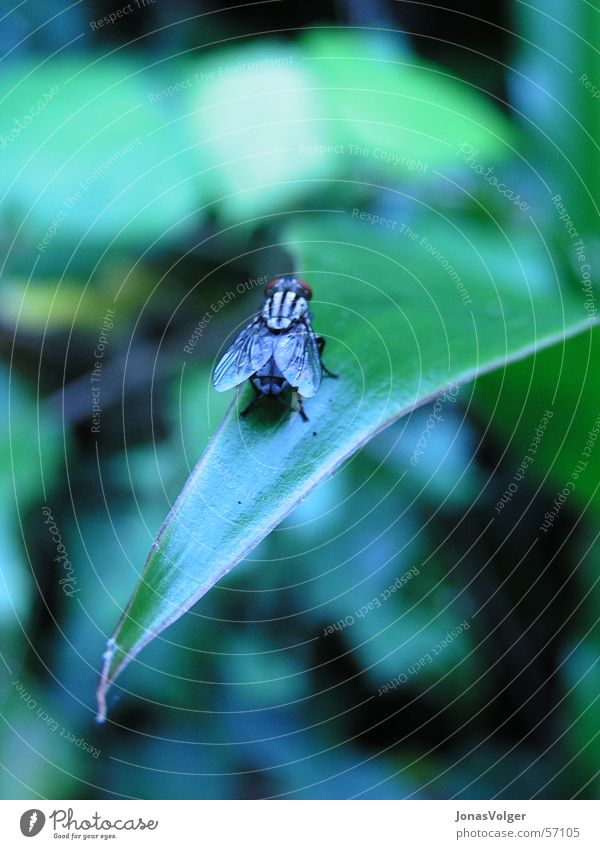 Plant Leaf Animal Fly Near Insect