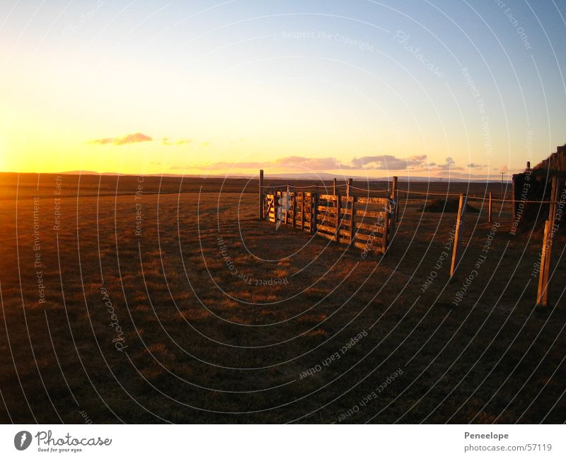 farm horses Sunset Afternoon Meadow Fence Farm Iceland Field Clouds House (Residential Structure) Far-off places Sky