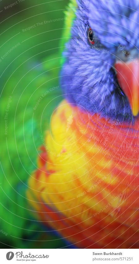 colours of nature Environment Nature Animal Wild animal Bird Animal face Wing 1 Exotic Crazy Blue Multicoloured Yellow Green Red Adventure Vacation & Travel
