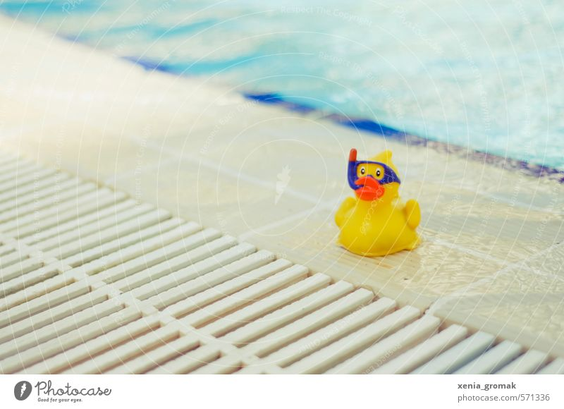 duck Wellness Swimming & Bathing Leisure and hobbies Playing Vacation & Travel Tourism Trip Adventure Freedom Summer Summer vacation Sun Sunbathing Beach