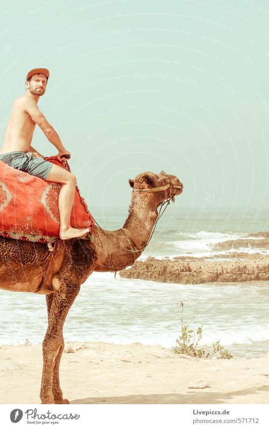 2 camels Vacation & Travel Tourism Trip Adventure Far-off places Freedom Sun Beach Ocean Island Waves Human being Masculine Man Adults 1 30 - 45 years