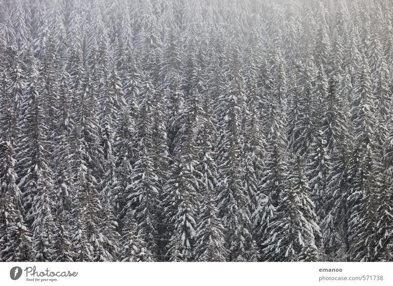 xmas trees Winter Snow Winter vacation Nature Landscape Plant Climate Weather Fog Tree Forest Mountain Dark Cold White Black Forest Spruce Coniferous forest