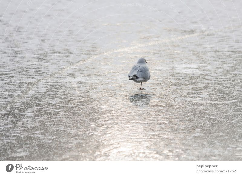 Water Loneliness Animal Winter Cold Snow Coast Lake Bird Ice Park Power Glittering Stand Beautiful weather Railroad