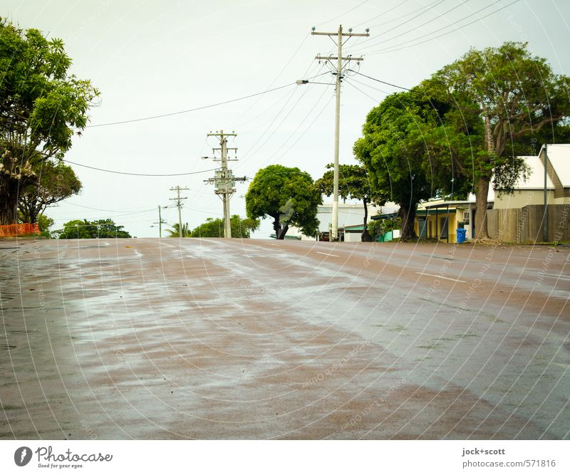 Tree Calm Far-off places Street Lanes & trails Bright Moody Rain Idyll Authentic Free Wet Clean Roof Serene Cloudless sky
