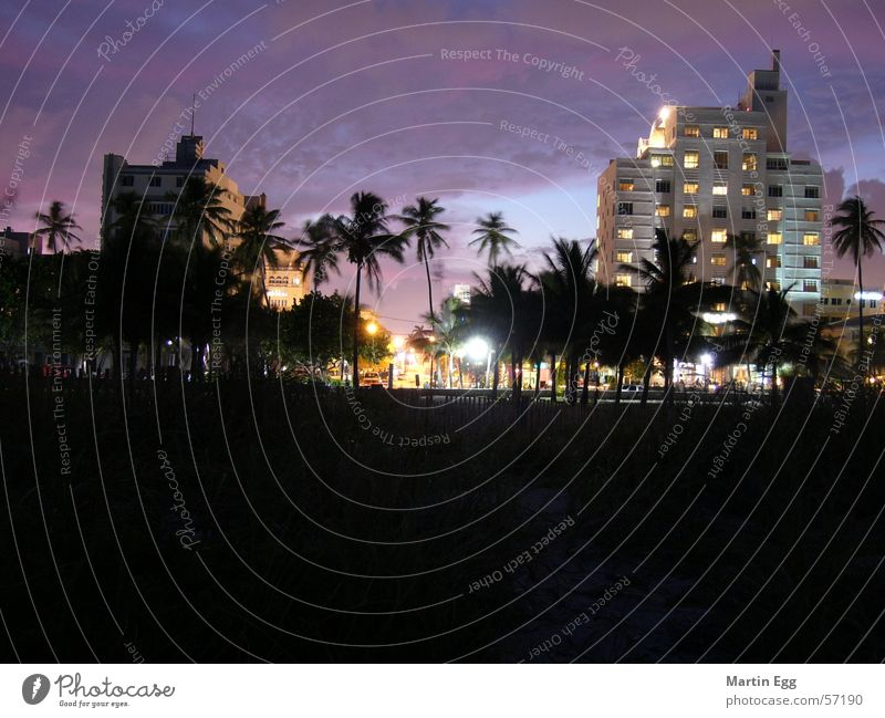 Beach Vacation & Travel Architecture Palm tree Florida Miami Art deco Miami Beach