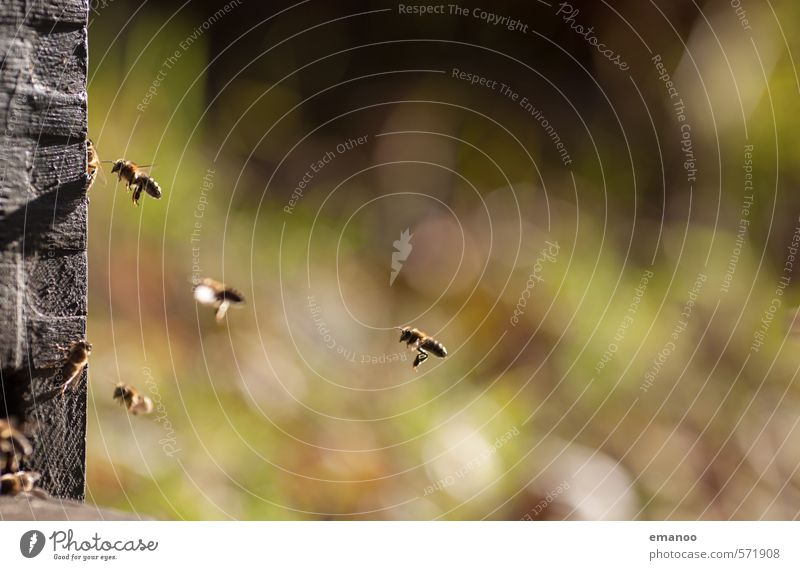 the hard-working Food Nutrition Work and employment Nature Landscape Plant Animal Spring Summer Autumn Bee Wing Flock Flying Warmth Green Together Movement