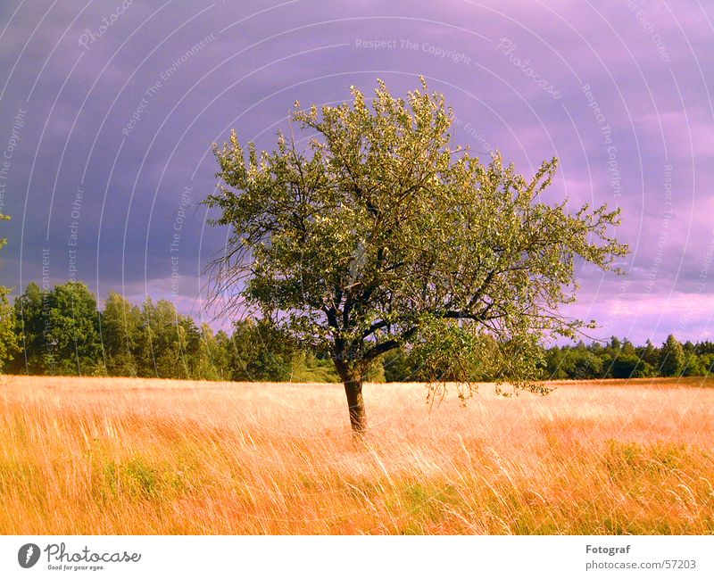 Sky Nature Green Tree Plant Leaf Forest Meadow Grain Thunder and lightning Heathland Hurricane Wood flour