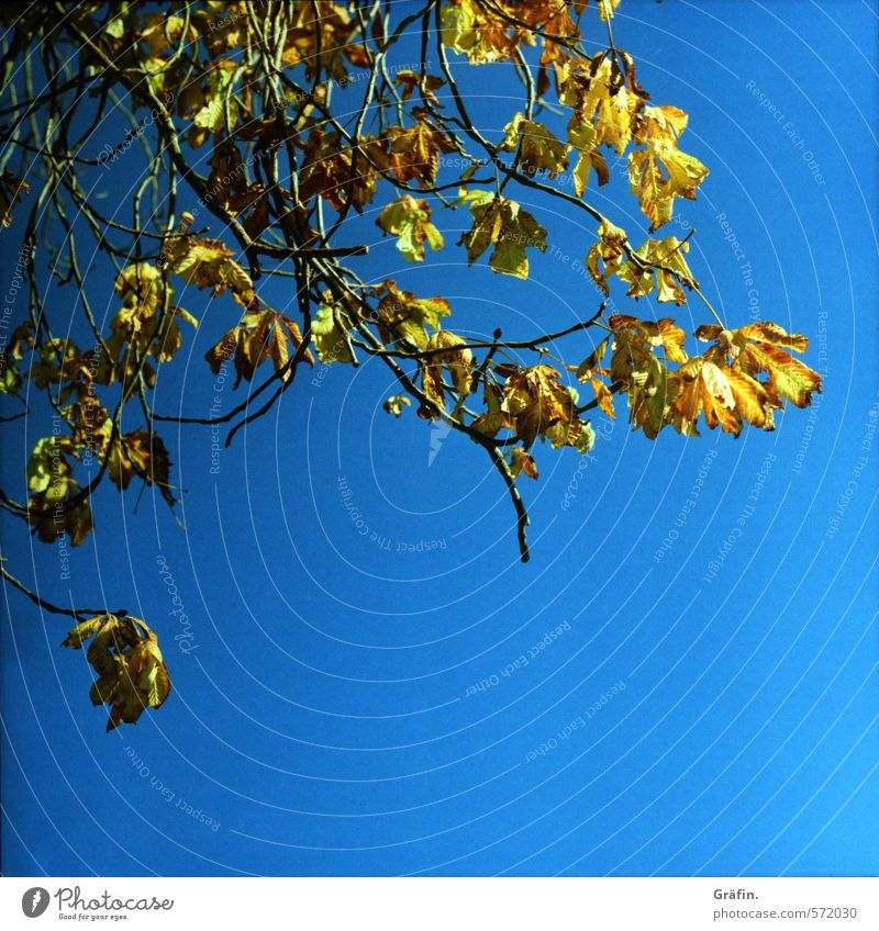 Sky Nature Blue Plant Tree Yellow Environment Autumn Transience Change Break Cloudless sky End Stagnating Faded To dry up