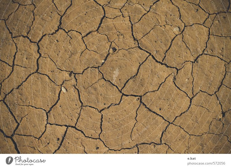 Nature Summer Beach Earth Climate change Exhaustion Drought