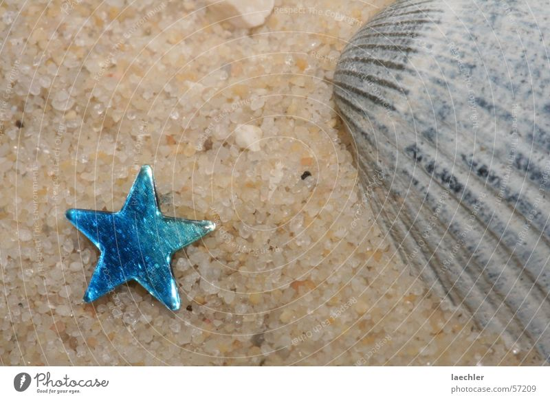 Beach Vacation & Travel Star (Symbol) Mussel Grain of sand