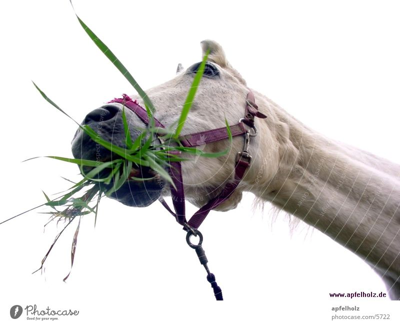 horse tastes good Horse Nutrition Crazy Fresh Grass Photographic technology
