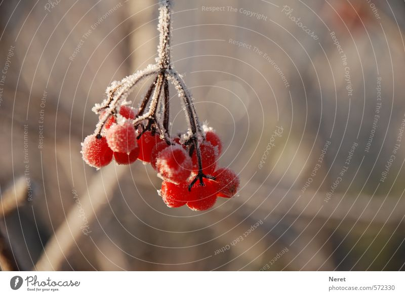 Nature Plant Winter Cold Ice Frost Discover