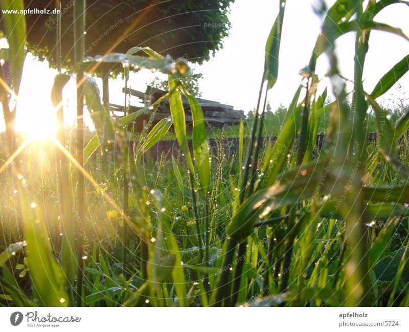 morning dew Sunrise Dew Grass Meadow